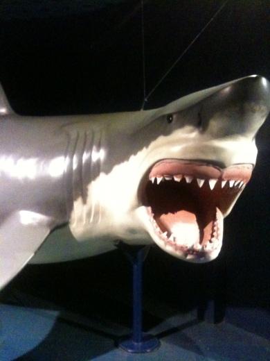 Representación Tiburón Blanco